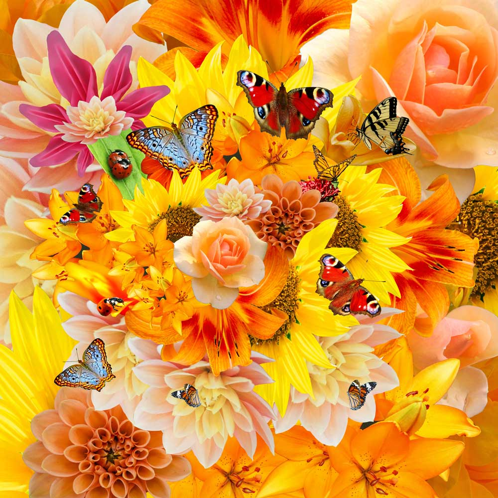 Collage of butterflies for Ignite Your Sexuality online course for women